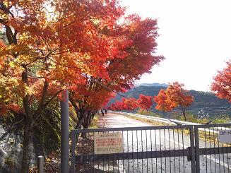 丹沢湖畔の駐車場2blog.JPG